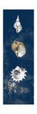 Coastal Shells Panel II Premium-giclée-vedos tekijänä Lanie Loreth