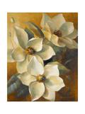 Magnolias Aglow at Sunset II Premium Giclee Print by Lanie Loreth