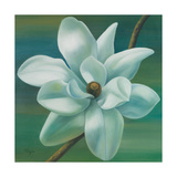 Star Magnolia Premium Giclee Print by Vivien Rhyan
