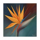 Bird of Paradise I Lámina giclée prémium por Vivien Rhyan