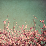 Printemps I Reproduction photographique par Susan Bryant