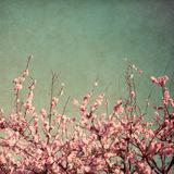Springtime I Photographic Print by Susan Bryant