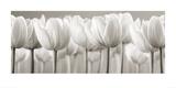 Weiße Tulpen Kunst von Ian Winstanley