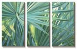 Fan Palm Prints by Suzanne Wilkins