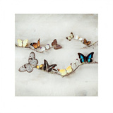 Array of Butterflies Art by Ian Winstanley