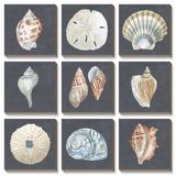 Shells on Slate Prints by Megan Meagher