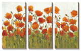 Rows of Poppies I Posters by Tim O'toole