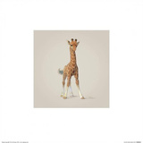 Giraffe Pôsters por John Butler Art