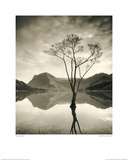 Silver Birch - Buttermere Posters by Mike Shepher