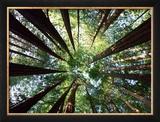 Floresta de pau-brasil Impressão fotográfica emoldurada por Douglas Steakley