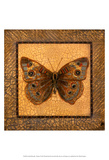 Crackled Butterfly - Buckeye Print by Wendy Russell