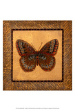 Crackled Butterfly - Fritillary Prints by Wendy Russell