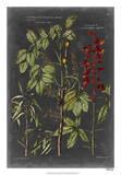 Vintage Botanical Chart III Giclee Print by  Vision Studio