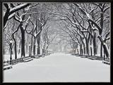 Central Park no inverno Pôsters por Rudy Sulgan