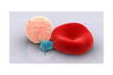 Conceptual Image of Platelet, Red Blood Cell and White Blood Cell Posters