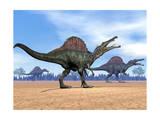 Three Spinosaurus Dinosaurs Walking in the Desert Láminas