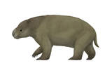 Diprotodon, the Largest Know Marsupial Posters