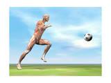 Soccer Player Musculature Running after Soccer Ball Prints