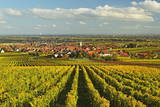 Vineyard Landscape and Maikammer Village, German Wine Route, Rhineland-Palatinate, Germany, Europe Lámina fotográfica por Jochen Schlenker