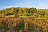 Vineyard Landscape, Near St. Martin, German Wine Route, Rhineland-Palatinate, Germany, Europe Lámina fotográfica por Jochen Schlenker