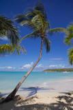 Beach and Palm Trees Fotografisk trykk av Frank Fell