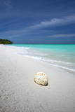 Shell on Tropical Beach, Maldives, Indian Ocean, Asia Photographic Print by Sakis Papadopoulos