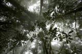 Mist in the Cloud Forest at Sombom Ridge in the Saruwaged Range Fotografisk trykk av Tim Laman