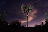 A Joshua Tree under Clouds and Stars Photographic Print by Ben Horton