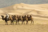 Bactrian Camels in the Khongoryn Els Sand Dunes in Gobi Gurvansaikhan National Park Fotografie-Druck von Ira Block