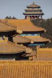 The Imperial Yellow Tiled Roofs of the Forbidden City Glow in the Winter Sun in Beijing Fotografie-Druck von Adrian Bradshaw