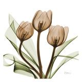 Tulipani  Stampa di Albert Koetsier
