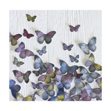 Butterfly Random Giclee Print by Howard Shooter
