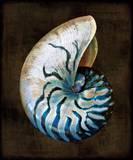Ocean Treasure IV Posters by Caroline Kelly