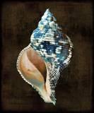 Ocean Treasure III Posters by Caroline Kelly