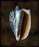 Ocean Treasure I Posters by Caroline Kelly