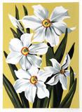 Påskliljor Limited Edition av Lowell Nesbitt