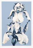 White Irises on Blue Limited Edition av Lowell Nesbitt