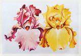 Pink and Yellow Irises Limited Edition av Lowell Nesbitt