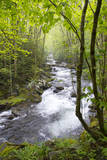 USA, Tennessee, Smoky Mountain NP. Middle Prong trail of Little River. Reproduction photographique Premium par Trish Drury