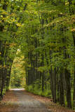 Tunnel of trees on the Covered Road near Houghton, Michigan, USA Photographic Print by Chuck Haney
