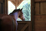 Horse in stall in rural Rappahannock County, Virginia, USA Photographic Print by Dennis Brack