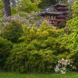 Pagoda in Japanese Tea Garden, San Francisco, California, USA Impressão fotográfica por Anna Miller