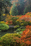 Japanese Gardens in autumn in Portland, Oregon, USA Photographic Print by Chuck Haney