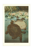 Soft Turtles Posters