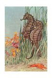 Two Seahorses Poster