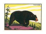 Black Bear Pósters