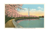 Japanese Cherry Blossoms, Riverside Drive Poster