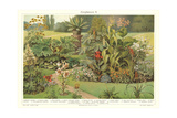 Assortment of Garden Plants Print