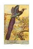 Oiseau de paradis Affiche