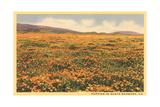 Field of Wildflowers Affischer